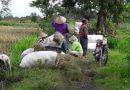 Javanese farmer